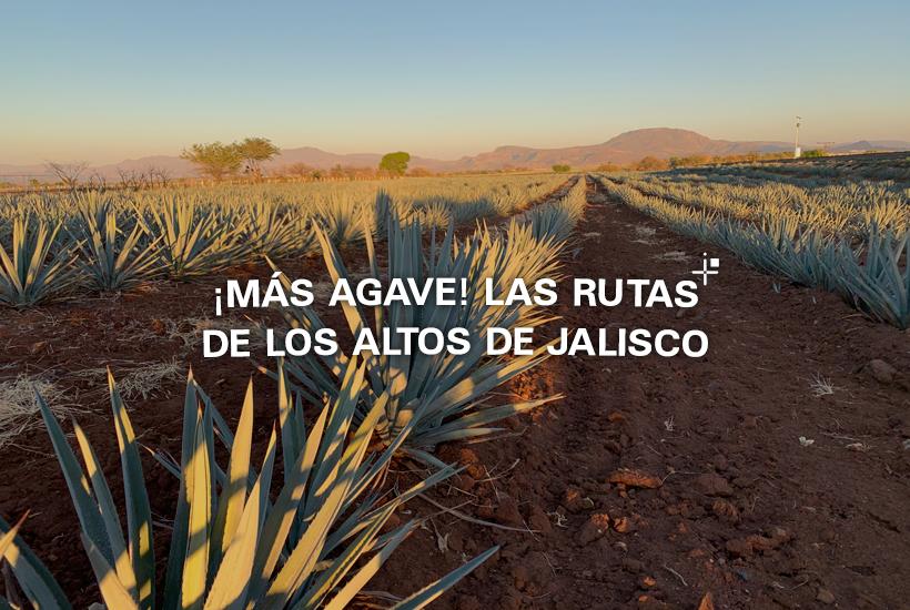 ¡Más agave! Las rutas de los Altos de Jalisco