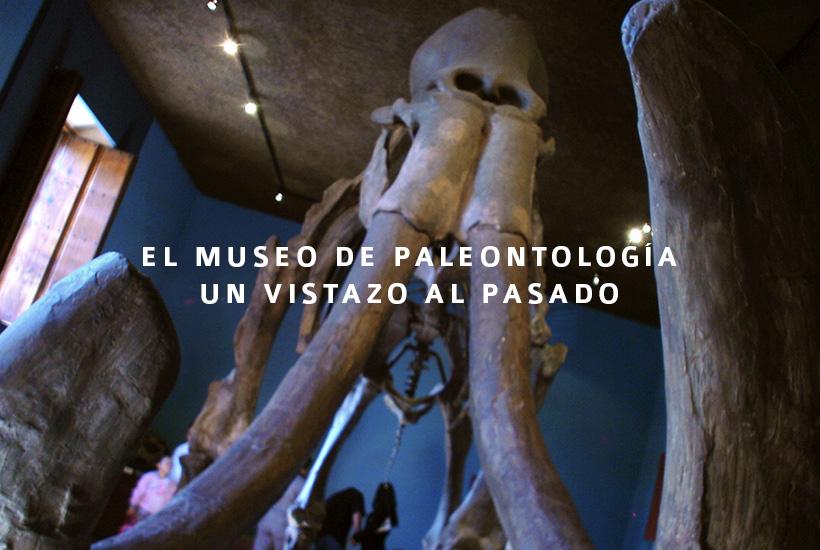 El Museo de Paleontología, un vistazo al pasado