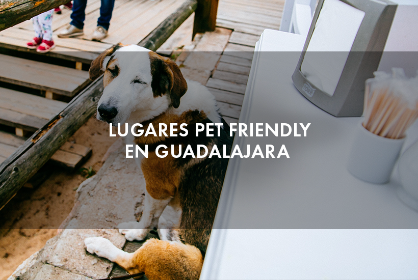 Lugares pet friendly en Guadalajara