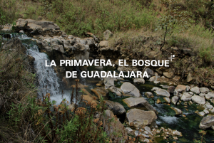 La Primavera, el bosque de Guadalajara